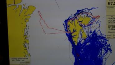 OLEX-kartutsnitt med den enorme Grønlandskysten til venstre og Svalbard til høyre. Rød sterk viser Havsels kurslinje fra Longyearbyen og vestover til isen, nordvestover gjennom isen og tilbake hvor vi kom ut av isen litt lengere sør, på N78:05.
