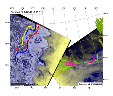 Sentinel-1A SAR image of 18. July @ 08:01, overlaid the trajectories of three GPS in sea ice and two sail buoys in Fram Strait.: Image processing: M. Babiker, NERSC.