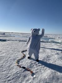 Falsk isbjørn i isbjørnland!: Foto: Bjørnar Hallaråker Røsvik, NERSC